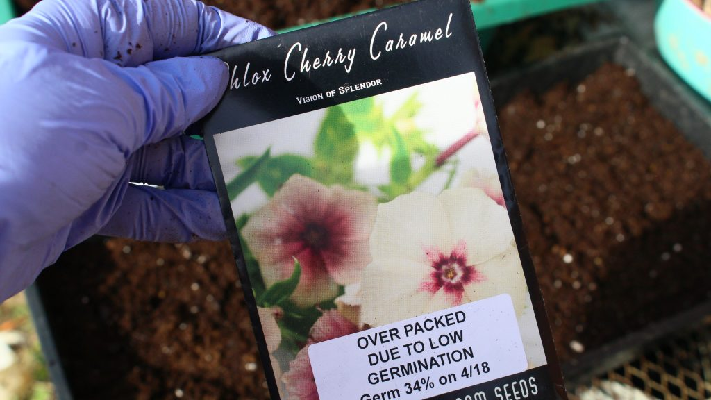 Winter Sowing Annual Phlox Flowers In Zone 6 7